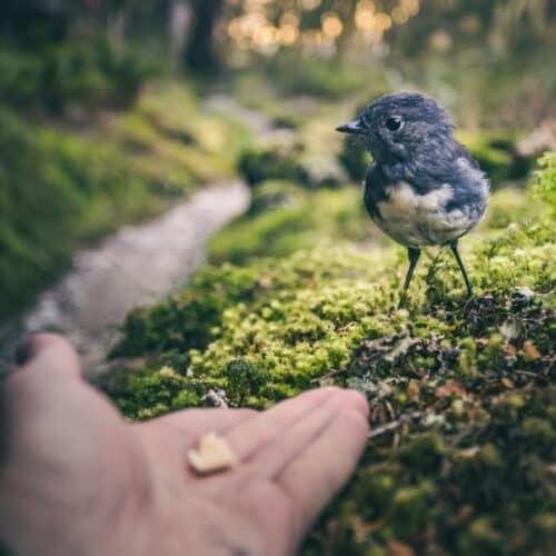 4 Ways To Establish Trust on Social featured image